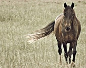 Walking In the Field of Autumn - 8x8 Fine Art Photography - Chestnut Brown Horse in Green Faded Field