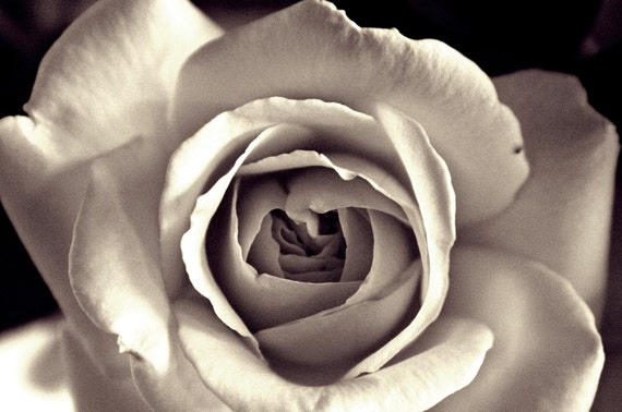 Old Hollywood - 11x14 Fine Art Photograph - Classic Black & White Rose Portrait - Romantic Dreamy Gift Ideas  for Lovers