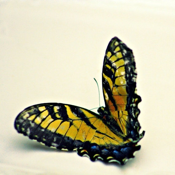 A Scrappy Bit of Spellbound - 4 x4 Fine Art Photography - Monarch Butterfly All Golden Yellow Orange