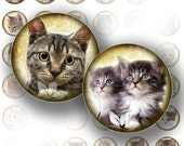 Rounds Cats and kittens digital collage sheets download 1 inch circles bottle cap images jewelry making paper supplies (067)BUY 3 GET 1 FREE
