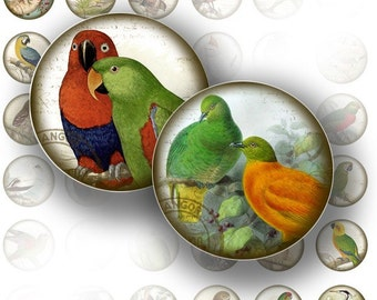 Victorian birds ephemera digital collage bottle cap 1 inch circle jewelry making paper supplies altered art download (053) BUY 3 GET 1 FREE