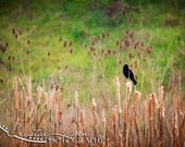 Little Black Bird - 8x10 Fine Art Photograph