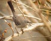 My Bird Friend - 5x7 Fine Art Photograph