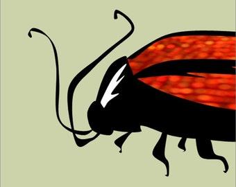 Beetle no. 1