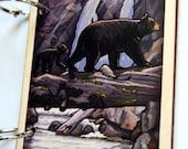 Sequoia National Park Black Bear Album