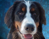 Very Best Dog's Sweet Bernese Mountain Dog 8 x 8 on stretched canvas