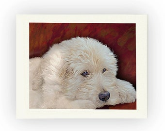 Custom Notecards of Your Pet or Favorite Photo 10 in a portfolio