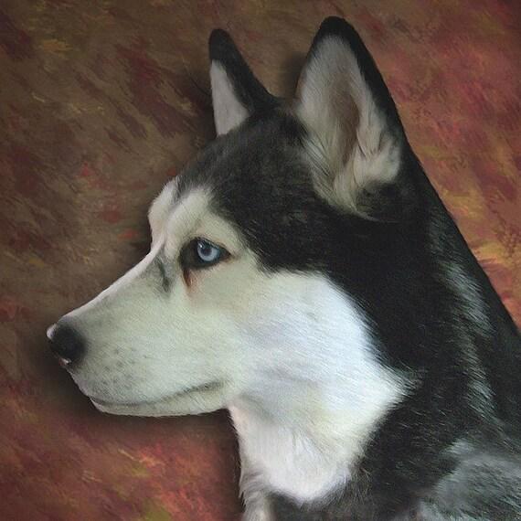 10 x 10 portrait of a Siberian Husky
