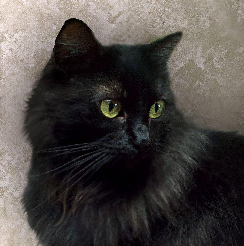 Pastel Black Cat