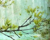 Tree Branch on textured turquoise background Fine Art Metallic Photo Print 11x14
