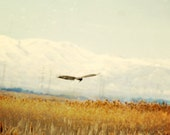 Abstract landscape with Eagle in Flight Fine Art Photo 8x8