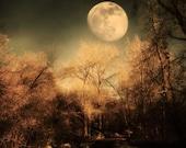 Dark Trees and  Moon 4x6 Fine Art Metallic Photo
