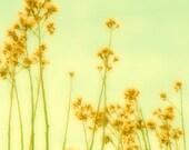 Glowing Yellow Floral Buds on a pastel green sky 8x8 Metallic Fine Art Photo Print