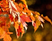 Autumn Leaf Photo Orange and Red Fall Fine Art Metallic Photograph 5x5