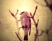 Holding On Antique Style Photograph of a Bird holding onto a Branch 8x8 Metallic Fine Art Photo Print