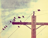 Birds on Power line Wire photograph 2 Metallic Fine Art Photo 8x8