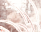 Abstract Pink Plant with Bokeh Fine Art Metallic Photo Print 8x8