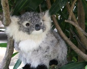 Silver Gray Koala, fur animal