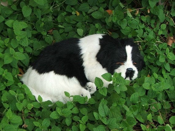 Sleeping Dog in  Black and White colors, fur animal