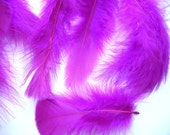 Feathers in Fuchsia and Plum Craft Qty 95