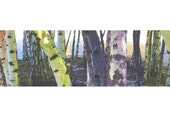 Woodland Art print giclee Birch trees landscape art
