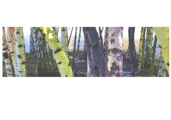 Woodland Art print giclee Birch trees landscape art
