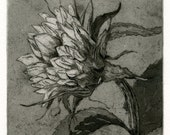 Special order for Mark, 4 etchings Sunflower Fine Art Etching, Helios