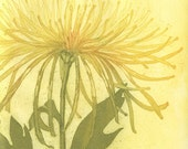 Chrysanthemum and Poppy, Fine Art Etching of Two Flowers