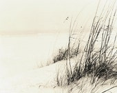 Sea Oats in an Ocean Breeze Done in an Alternate Process Fine Art Beach Photo