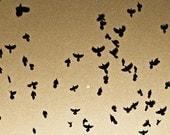 Grackles in Flight Around the Moon Sepia Fine Art Photography Bird Art