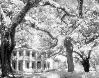 Eden State Park  An infrared black and white photograph