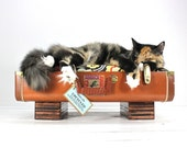 Upcycled Tan Suitcase Pet Bed Handmade Wood Legs