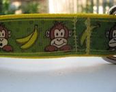 Monkey adjustable dog collar