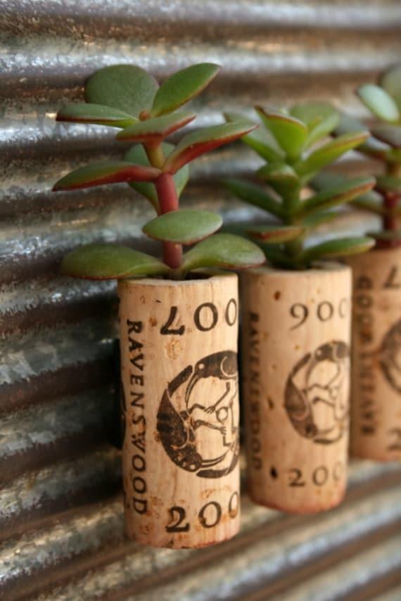 Succulent Cork Magnets, Jade Ravens Set of 3