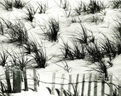 Dune Grass - American beach  'Sagaponack Dunes'. Black & White Photograph a limited Edition print one of only 25. FREE postage