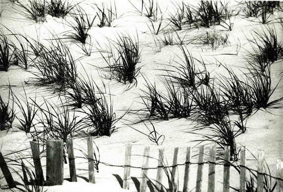 Dune Grass - American beach  'Sagaponack Dunes'. Black & White Photograph a limited Edition print one of only 25. FREE world shipping