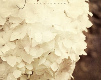 Cream Colored Hydrangea - shabby chic, textured 8x10 Fine Art Photography Print