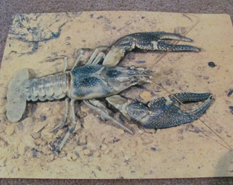 Vintage Picture Story Study Print - Animals Without Backbones - CRAYFISH Circa 1964