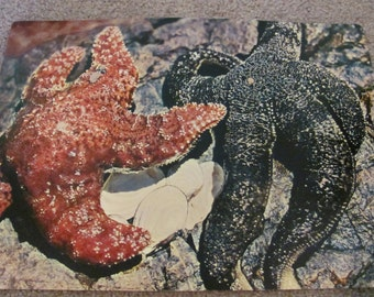 Vintage Picture Study Print Poster - Animals Without Backbones - STARFISH - Circa 1964