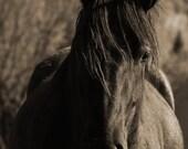 Serenade in Sepia - 8x10 Fine Art Photo Horse Print