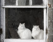 Barn Cats in Window - 8x10 Fine Art Photo Print