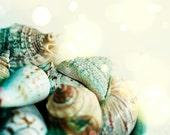 Sea Shells in bowl - 8x10 Fine Art Print