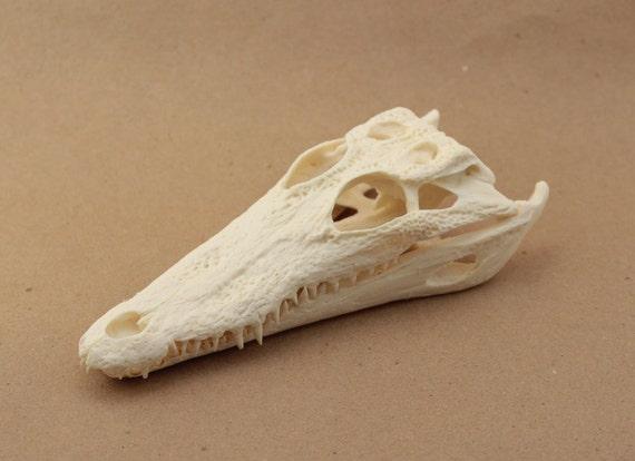 nile crocodile replica skull