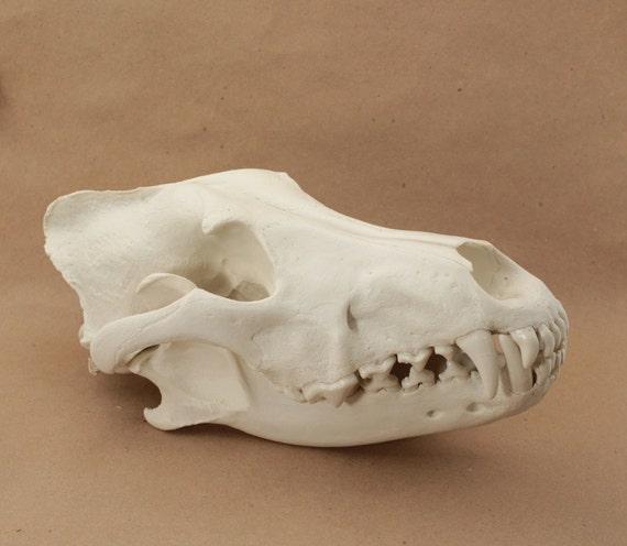 replica wolf skull