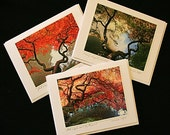 Maple Magic Photo Greeting Cards