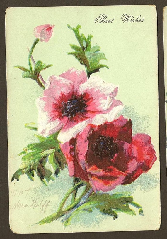 Pink Rose and Poppies Vintage Floral Postcard 1907- PAIR