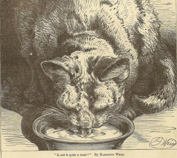 Kitty and his bowl of milk - Original Bookplate from 1881 Chatterbox - by Harrison Weir