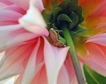 pacific green tree frog-11x14 photograph- Washington