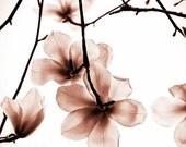 5X7 Print of Magnolias