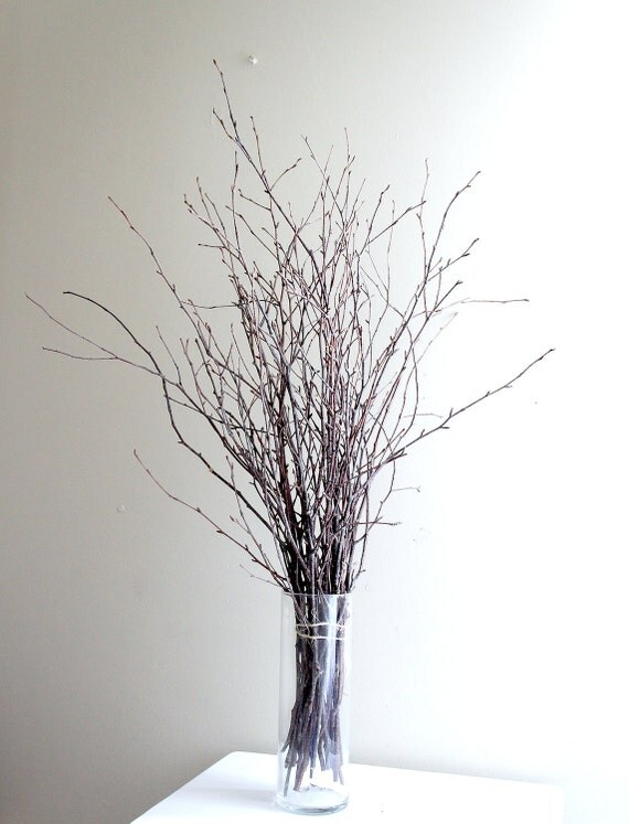 Sale -  natural white birch twigs for diy projects